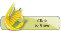 2016-2017 Corn Lineup