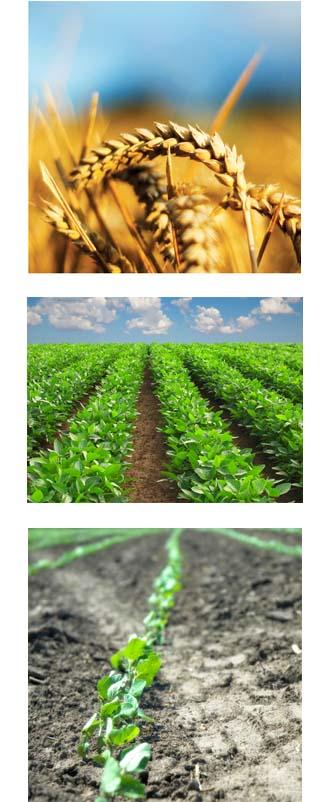AG - fields same size.jpg
