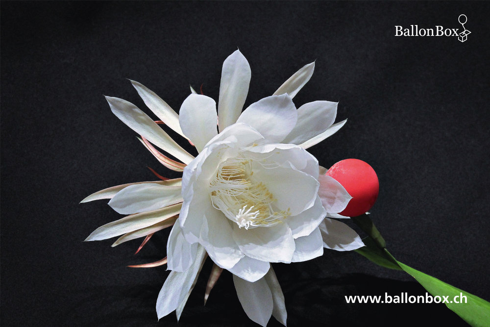 BallonBox_Kalender_18_12.jpg