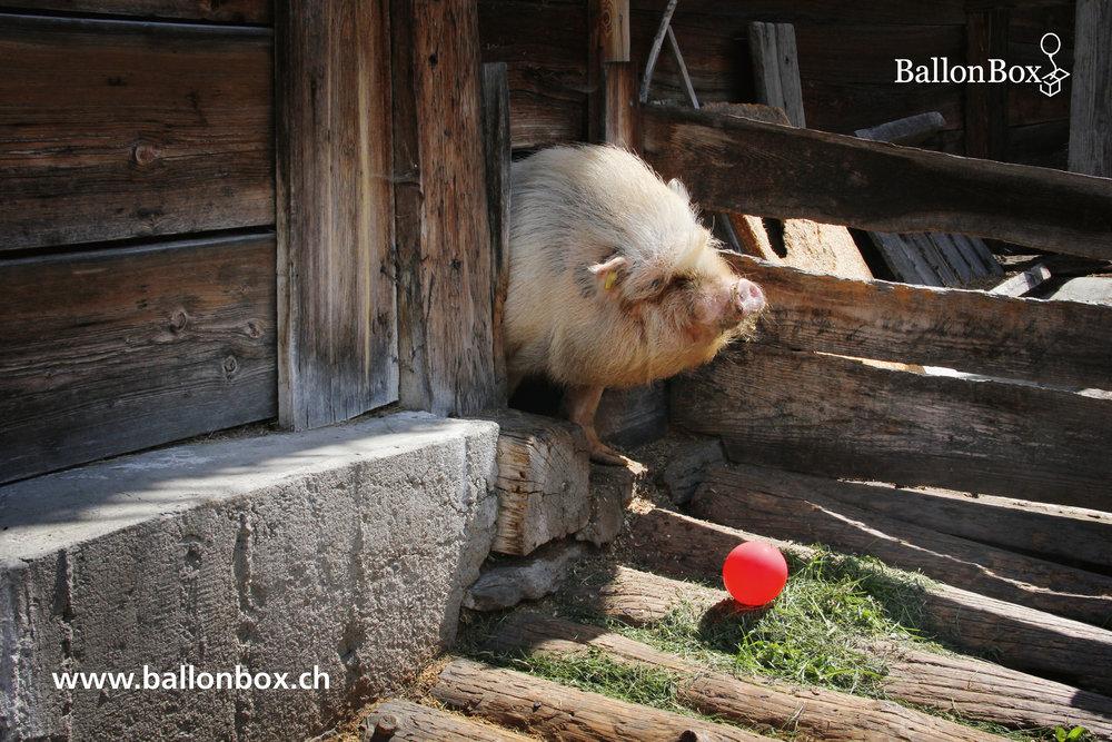 BallonBox_Kalender_19-01.jpg