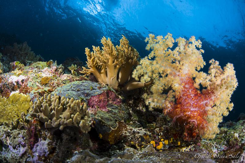Palau-5.jpg