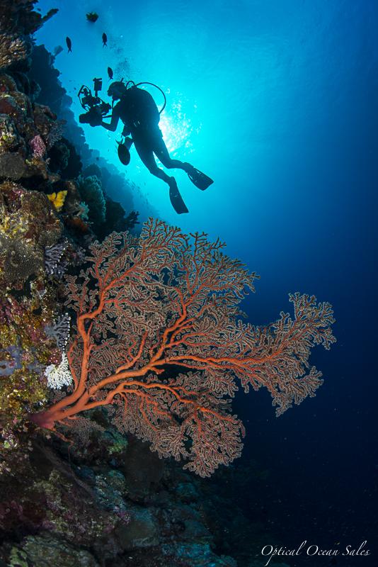 Palau-11.jpg