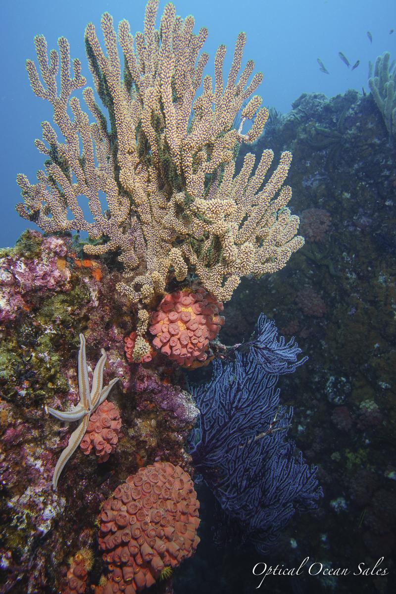 Coral Garden Los Bajalitos.jpg