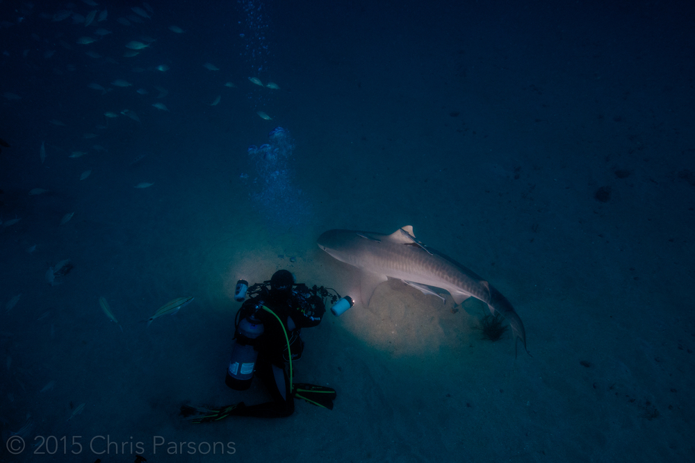 We had a couple of Tiger Sharks too. Same day, just using aperture and shutter speed to make it look darker.