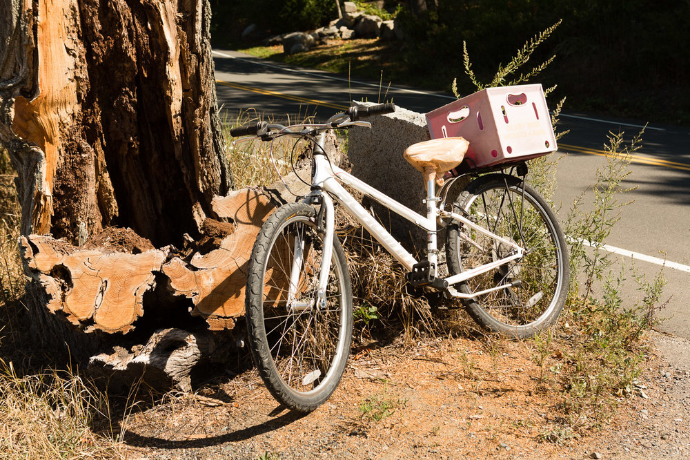 Kay Ray's current daily driver, a Schwinn hybrid, with the all-important milk crate attachment on the back. (Photograph by Jason Grow)