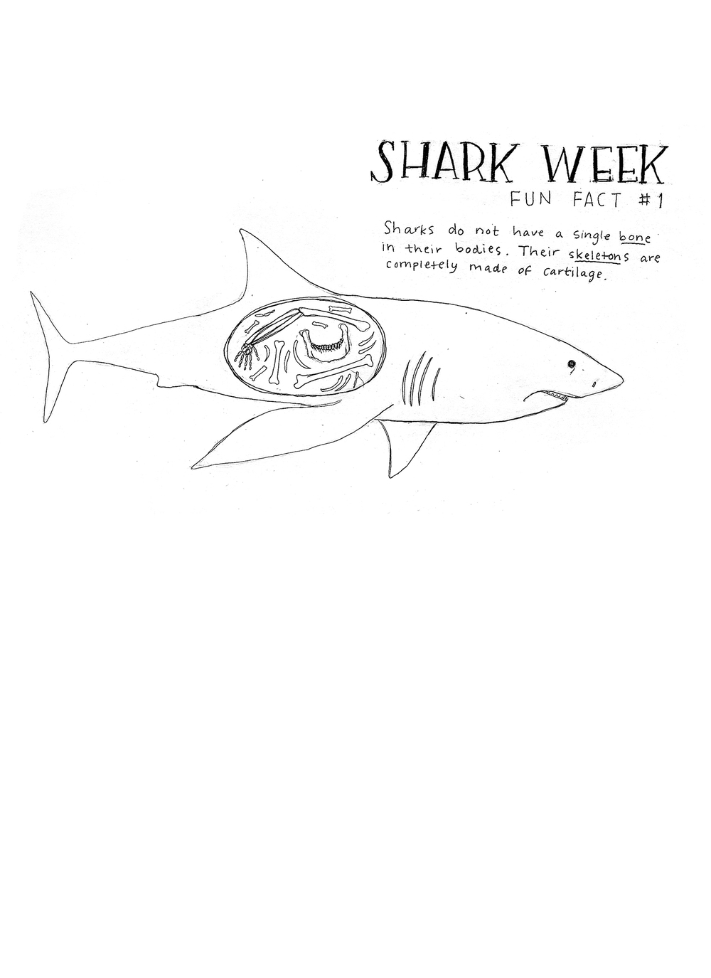 SharkWeek_fact1_edited.jpg