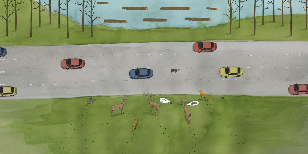Wildlife Crossings - Cover