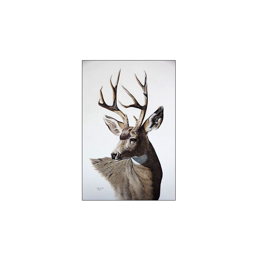 Muley Buck - Sold