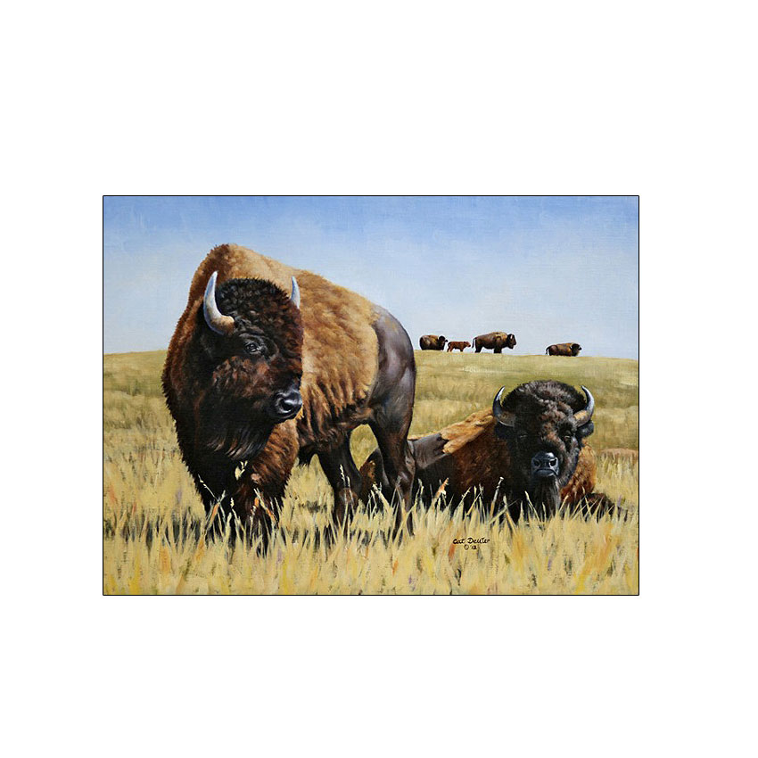 Prairie Native - Original Available