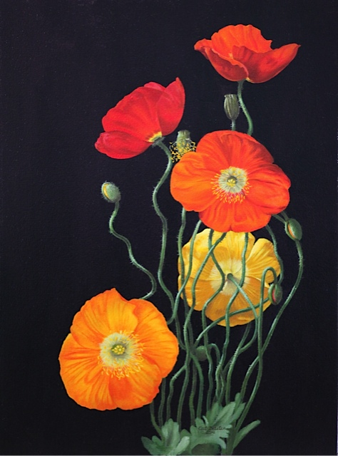 Icelandic Poppies.jpg
