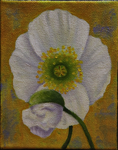 "White Icelandic Poppy 5"" x 4"" oil on canvas"