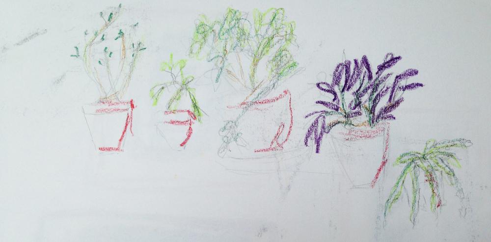 sarah-blick_kettlesyard_house_plants.jpg