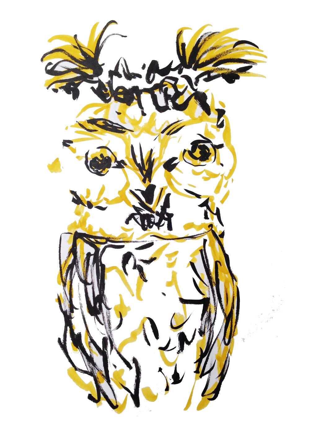 sarah-blick_fitzwilliam_owl_2.jpg