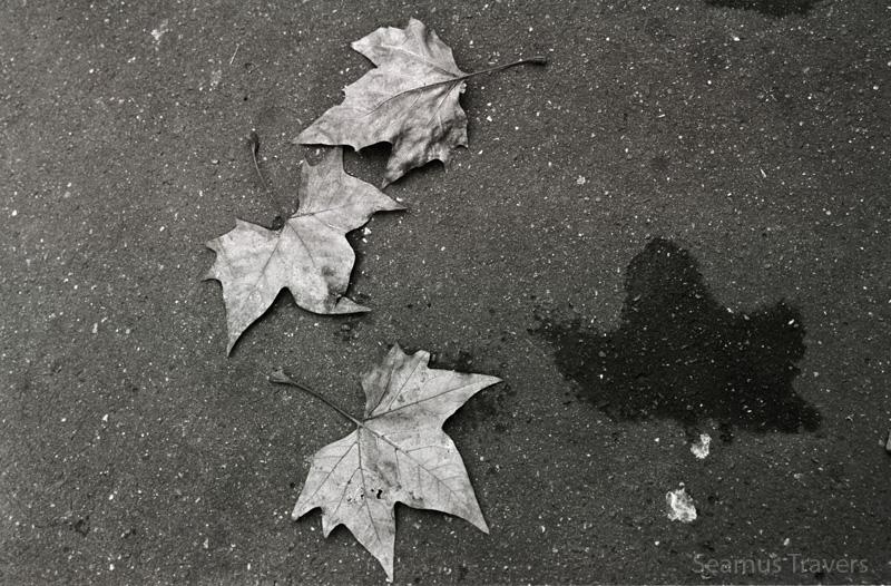 Leaves-Paris