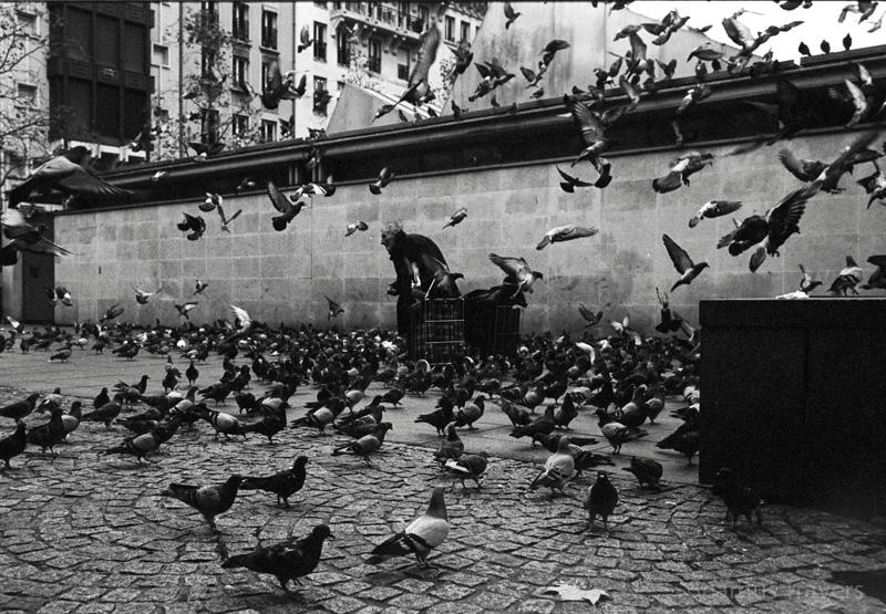 Pidgeons Paris