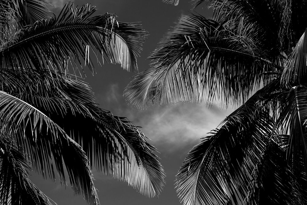Dominican-Palms-Web-IMG_3022.jpg