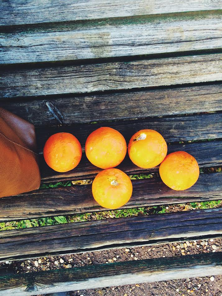 ^ These oranges ended up being the dry, bitter type only good for making marmalade. They were so so sour but we had fun picking them.