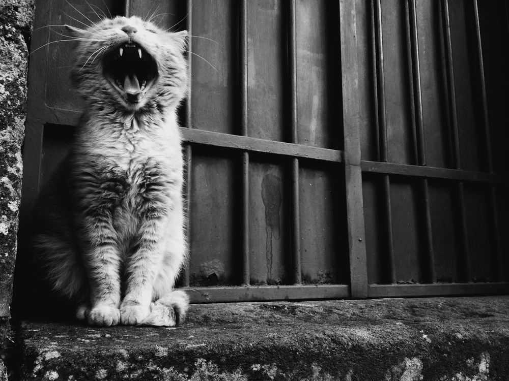^ Photo credits to Cesar Chacon. He caught this guy mid-yawn. I love this picture!