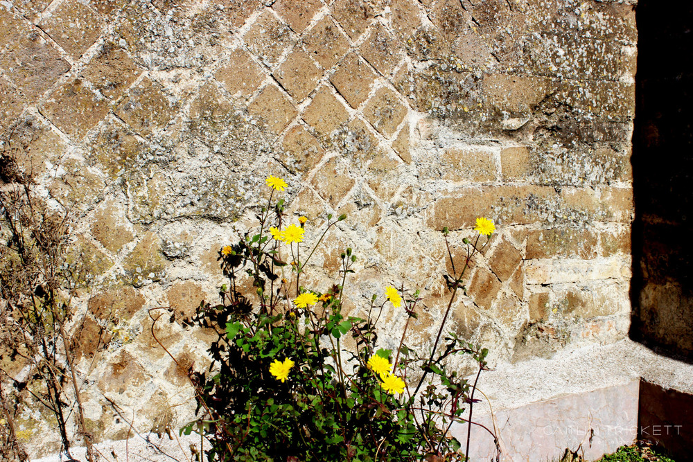 ^ This blog post needed some color! Here are some nice flowers growing at the large baths of Hadrian's Villa.