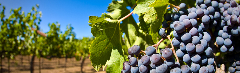 Food in the News: Week of July 23, 2014 | Wine Industry Responds to Climate Change | SavoryPantryBlog.com