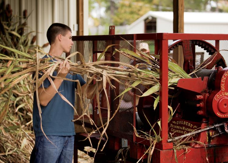 Harvesting Sorghum | SavoryPantryBlog.com