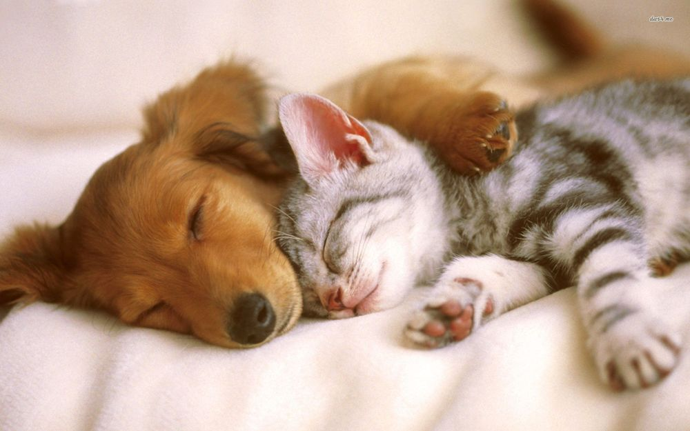 puppies-and-kittens-sleeping-cute-baby-puppies-and-kittens-sleeping.jpg