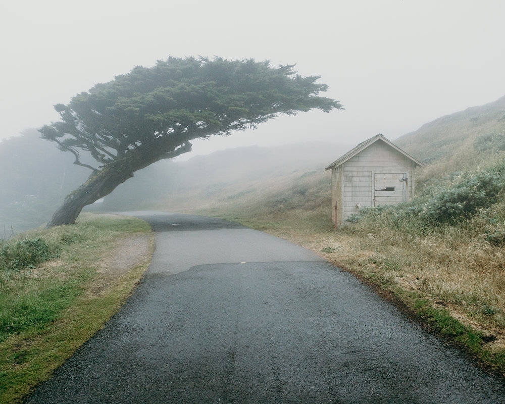 Point Reyes - Tree