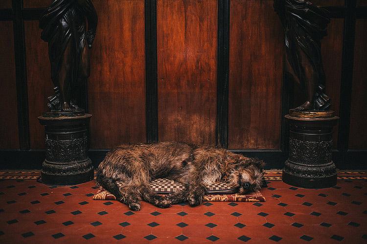 cabra castle irish wolf hound