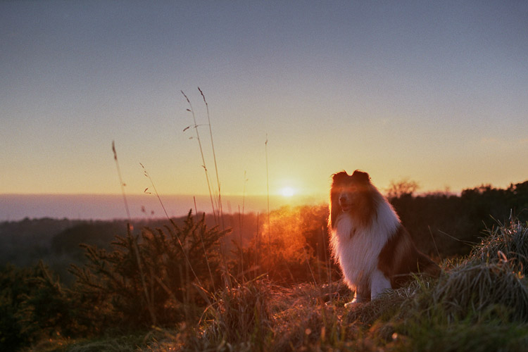 dog sunset film photo