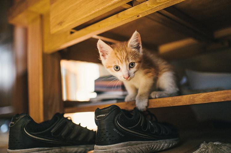 kitten wedding