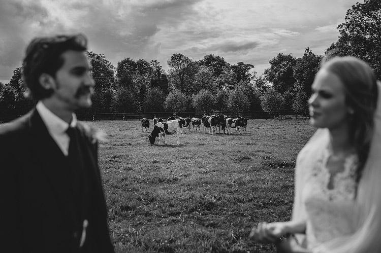 cows wedding