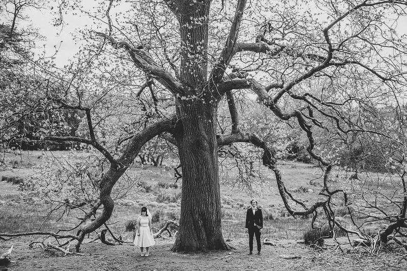 old tree wedding