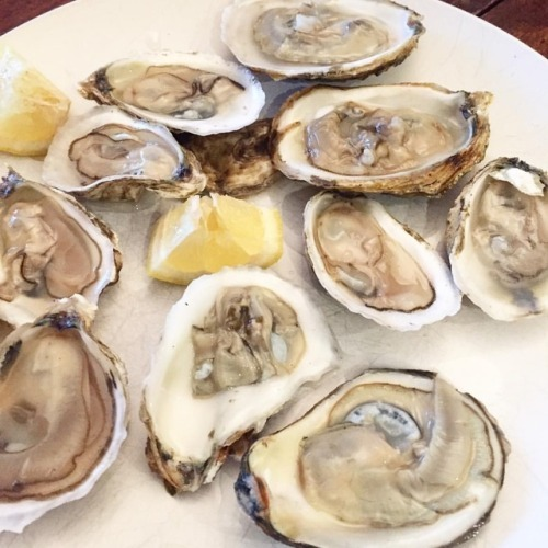 Oysters on the half shell at Thousand Dollar DInner.jpg