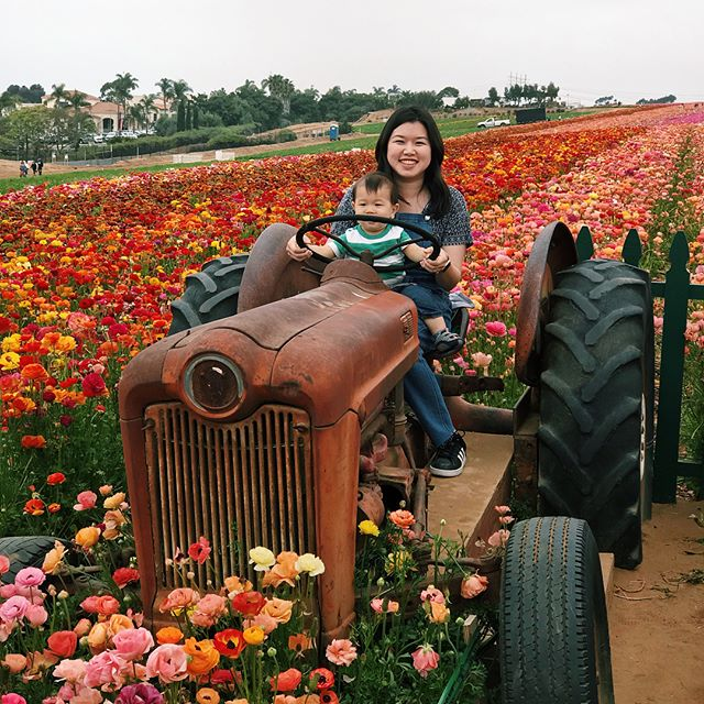 Loved walking around the flower fields with #elliotspak ! Great photos @jamespak , you should have won the flower photo contest!