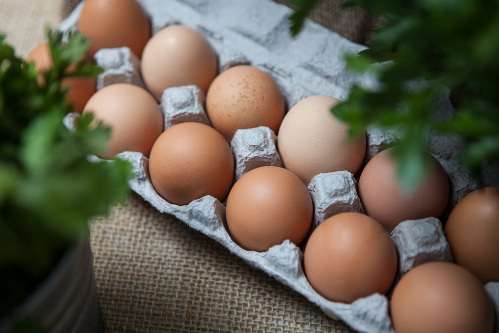 wingate_farm_eggs_alyssa_robb_photography-1.jpg