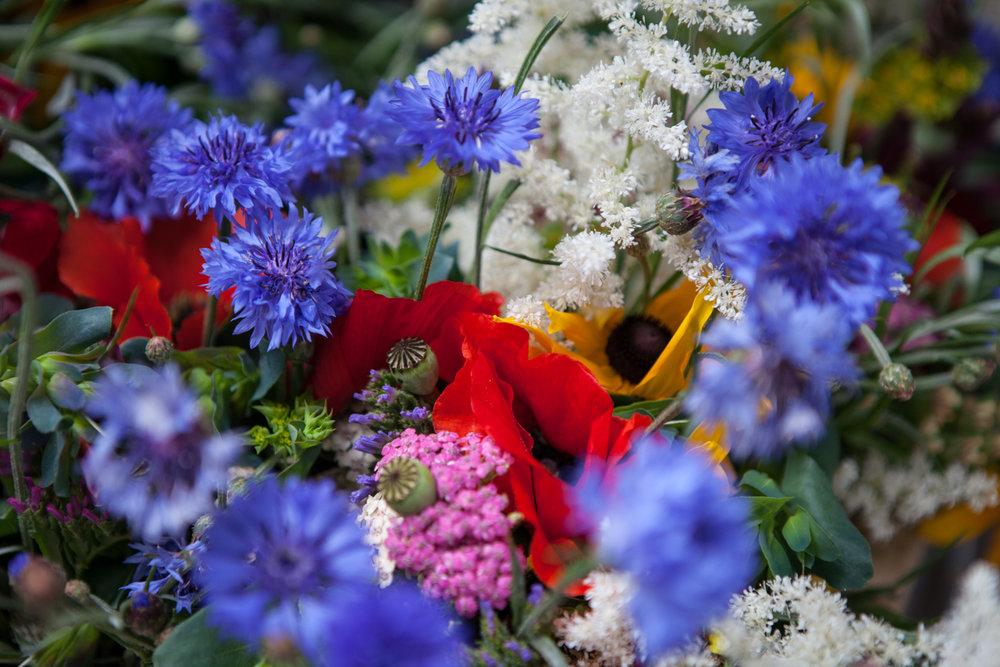 wingate_farm_flowers_alyssa_robb_photography-1.jpg