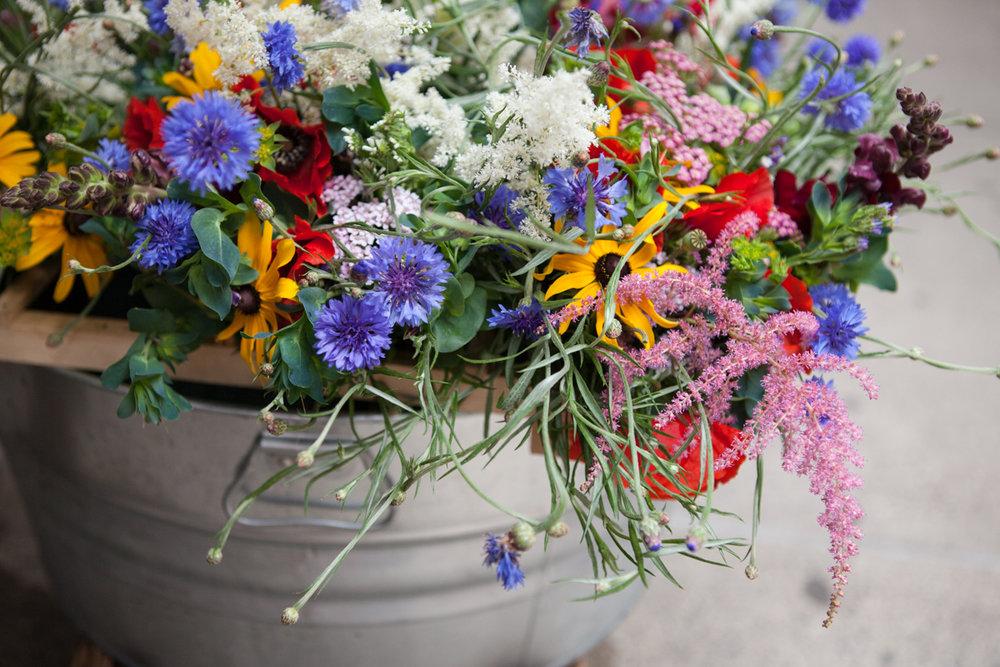 wingate_farm_flowers_alyssa_robb_photography-2.jpg