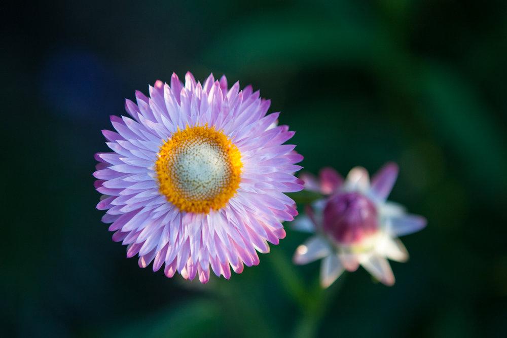 wingate_farm_flowers_alyssa_robb_photography-5.jpg