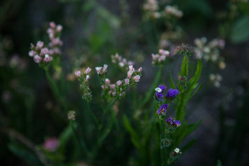 wingate_farm_flowers_alyssa_robb_photography-7.jpg
