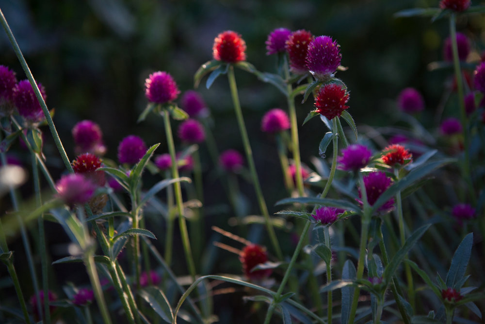 wingate_farm_flowers_alyssa_robb_photography-8.jpg