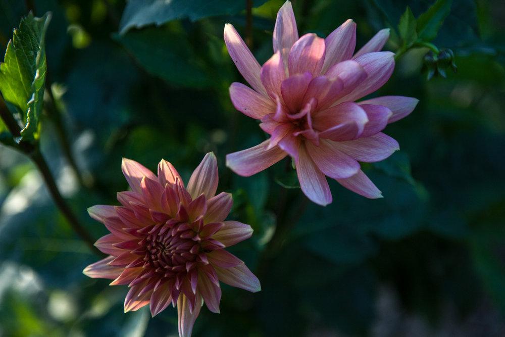 wingate_farm_flowers_alyssa_robb_photography-10.jpg