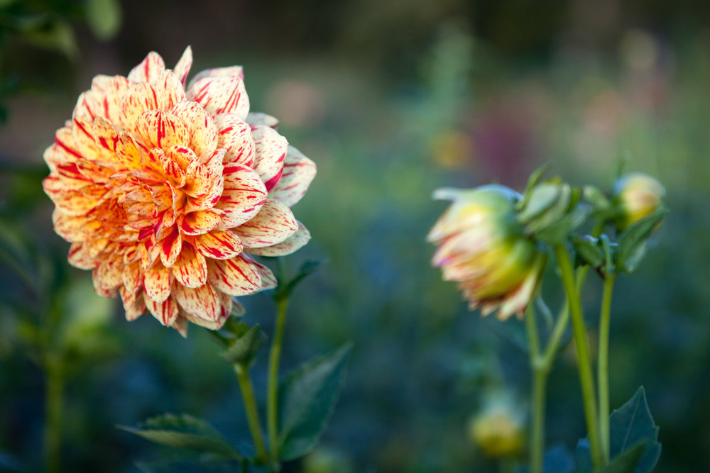 wingate_farm_flowers_alyssa_robb_photography-11.jpg