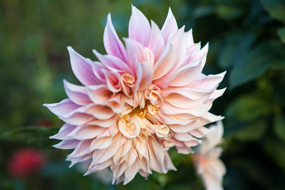 wingate_farm_flowers_alyssa_robb_photography-12.jpg