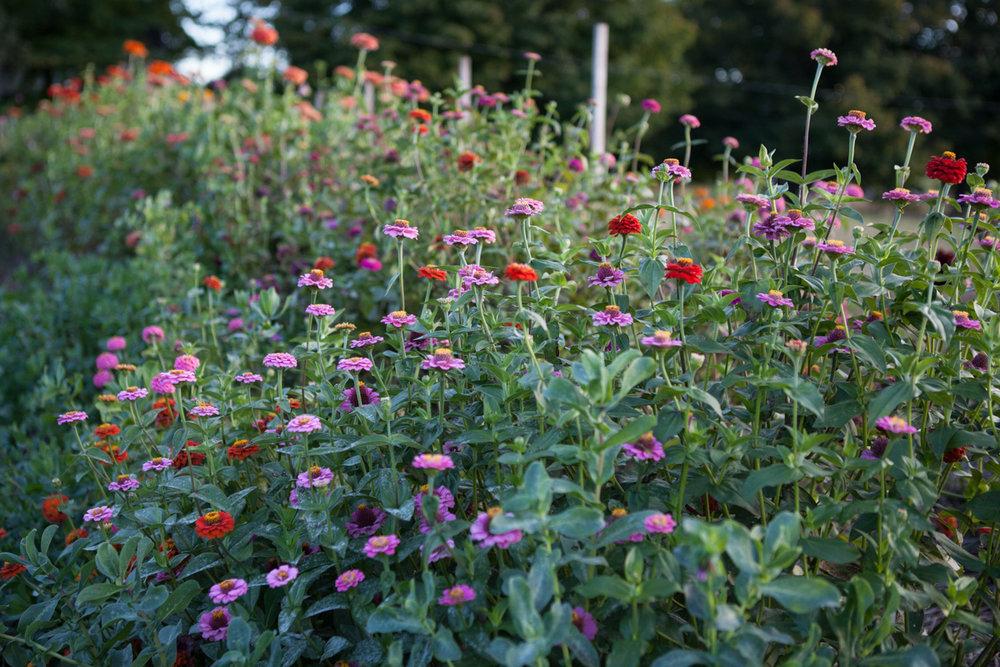wingate_farm_flowers_alyssa_robb_photography-14.jpg