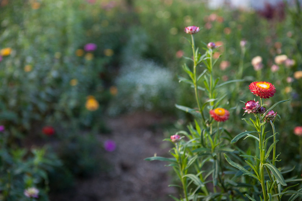 wingate_farm_flowers_alyssa_robb_photography-15.jpg