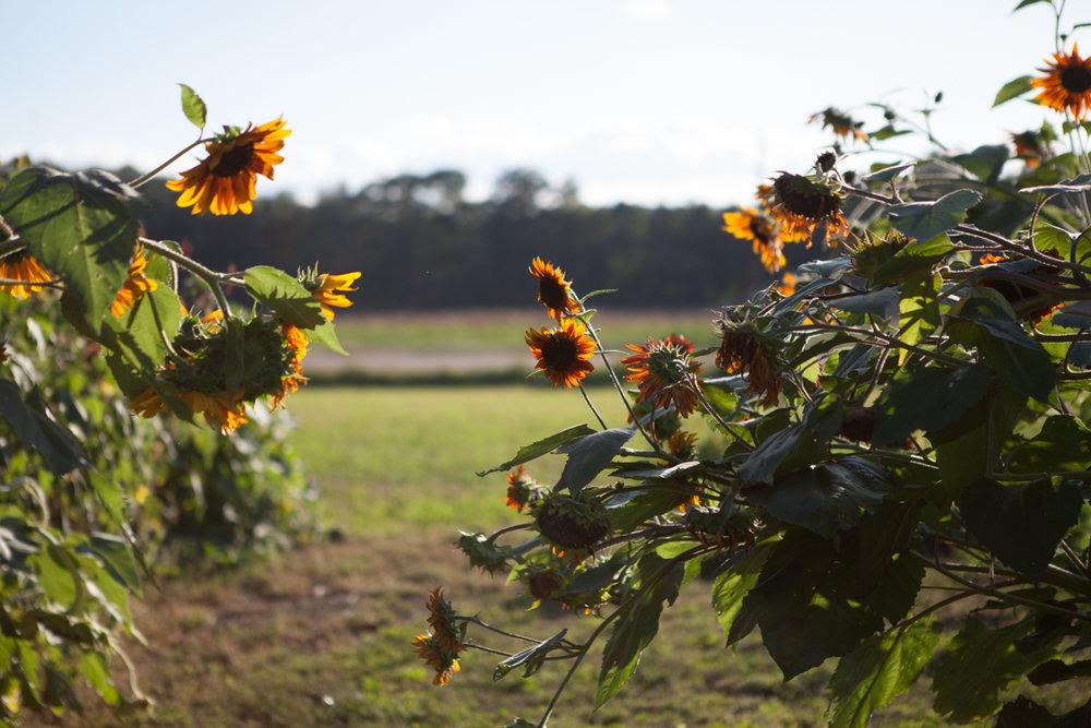 wingate_farm_flowers_alyssa_robb_photography-17.jpg