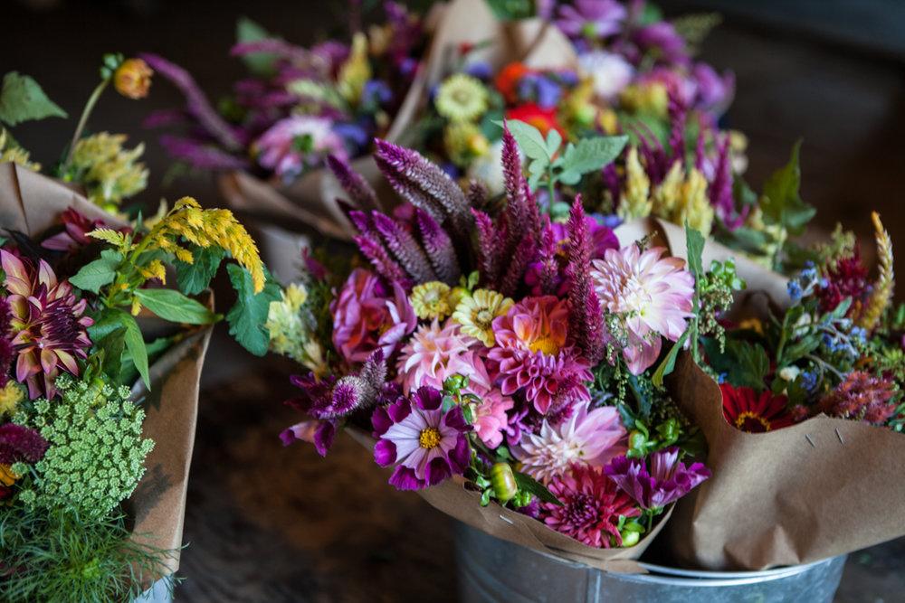 wingate_farm_flowers_alyssa_robb_photography-19.jpg