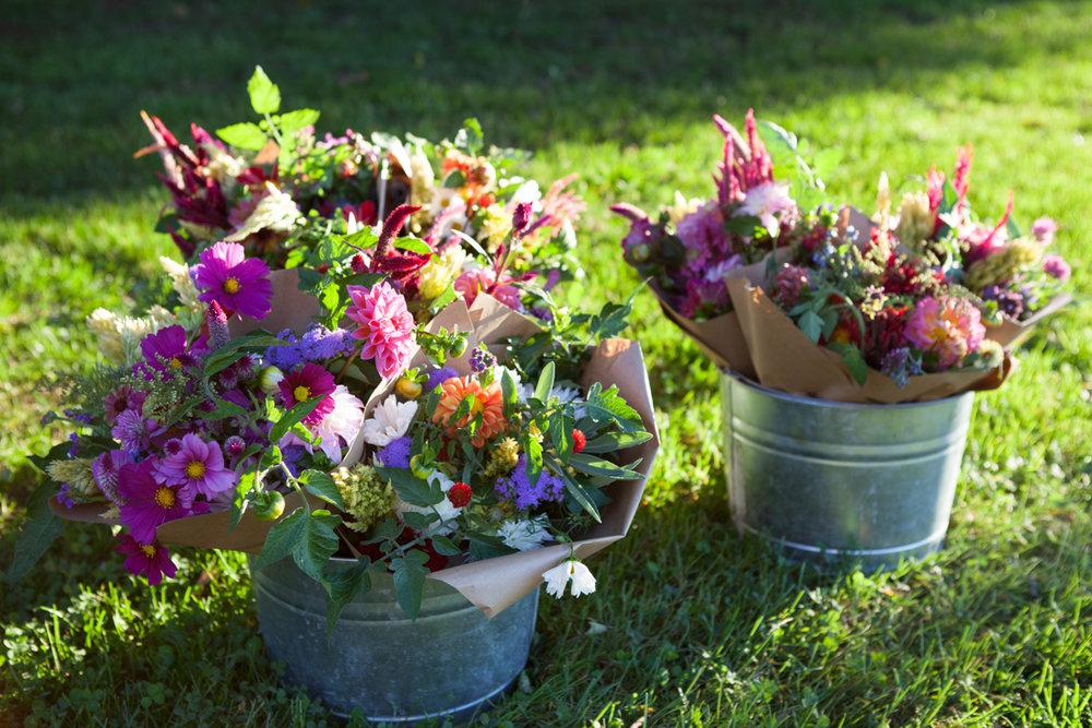wingate_farm_flowers_alyssa_robb_photography-18.jpg