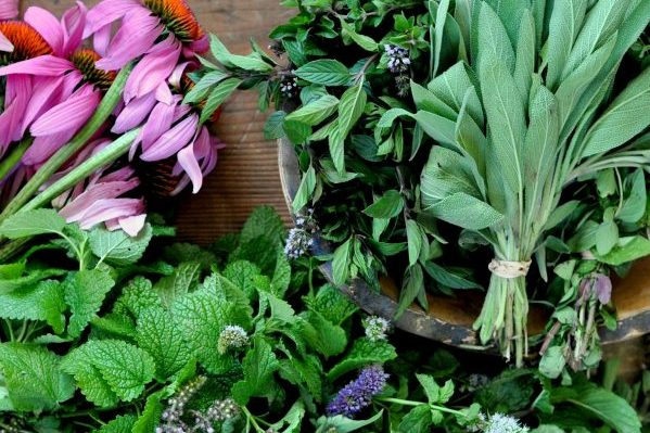 Sawmill Herb Farm is run by Susan Pincus in Florence, MA.  They grow top quality organically grown healing plants for the community.  Sawmill offers tea blends, bulk dried herbs, culinary herb and spice blends, and a line of herbal extracts and body products. -