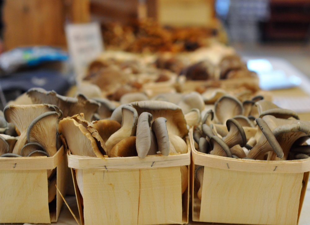 Mycoterra Farm is run by Julia Coffey in Westhampton, MA. Mycoterra Farm produces a variety of gourmet and exotic mushrooms year-round including: shiitake, oyster, lion's mane and more varieties.  -